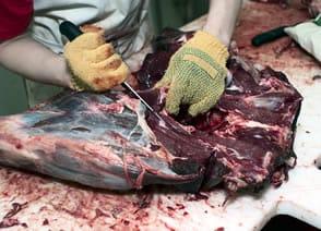 Processing Deer Meat